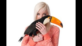 I Let My Toucan ATTACK My Husband | TOUCANS BITE!
