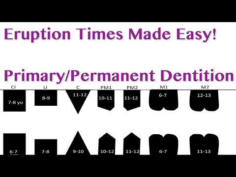 Tooth Eruption Sequence - Primary/Permanent Dentition