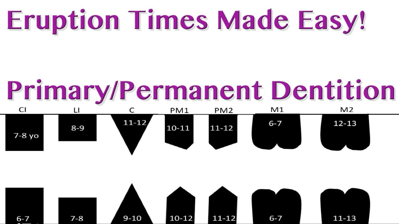 Tooth Eruption Sequence Primary Permanent Dentition Youtube
