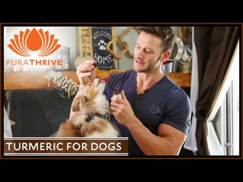 Turmeric for Dogs: Pet Inflammation | PuraTHRIVE- Thomas DeLauer