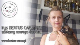 OGŁOSZENIE NIEAKTUALNE - Irys Beatus Canes UCI