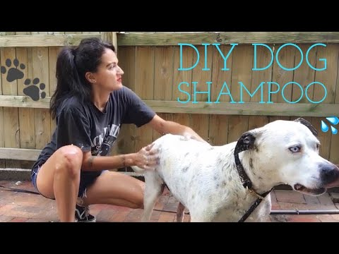 DIY (oatmeal) Dog Shampoo