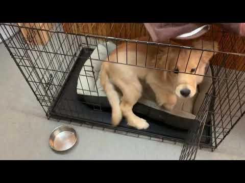 子犬たんとハウス!のトレーニング