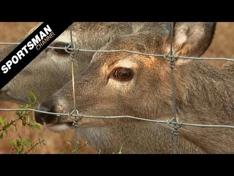 What Deer See and Other Whitetail Research Part 1