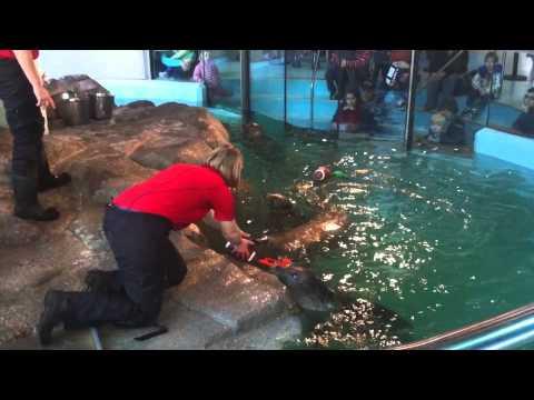 Maritime Aquarium Seals Predict Winner of Super Bowl XLVIII