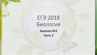 ЕГЭ Биология Задание №3 Часть 2 Генетика