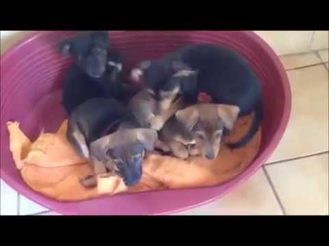 Les 5 Chiots Au Refuge Spa D Hermeray Youtube
