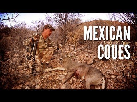 Mexican Coues Deer Hunt