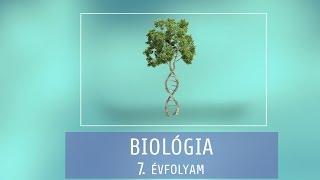Gambar cover Állati és növényi szövetek