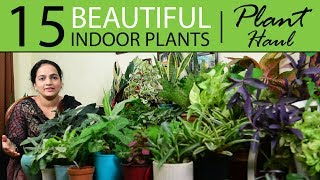15 Beautiful Indoor Plants Haul | Indoor Plants India