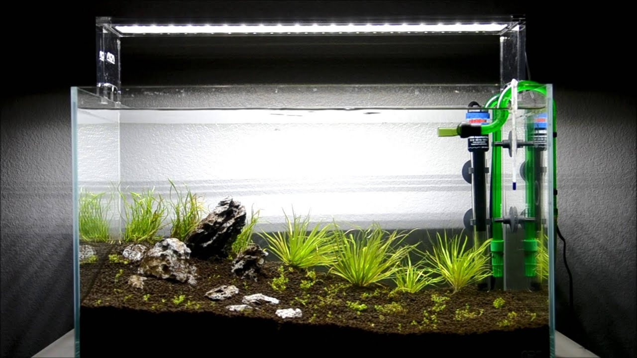 Aqua design amano ada 60 p project first water change for Aqua design oldenburg