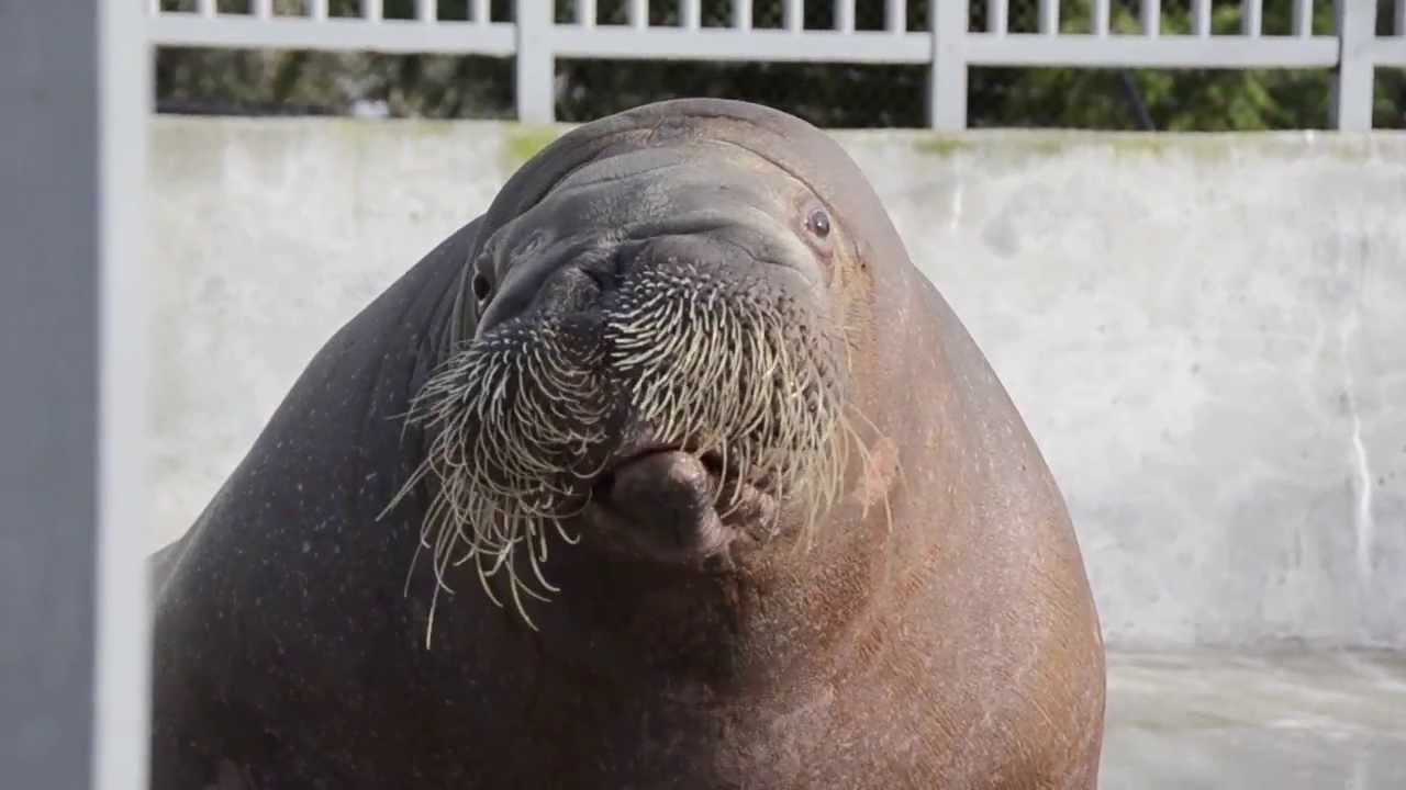 Joan the Walrus shares her MNF prediction