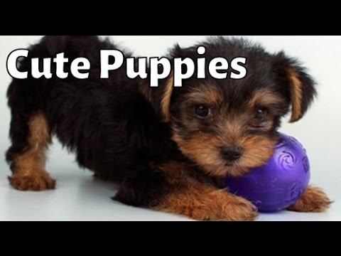 Cute Puppies!  Escape In West Ridge Mall Commercial, WIBW TV