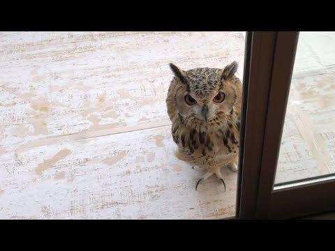 The house where an owl waits for you