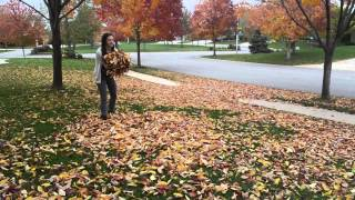 Kc The Leaf Flipping Golden Retriever