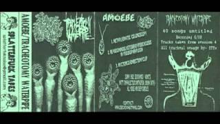 Amoebe - Metaplasmatic Colonoscopy