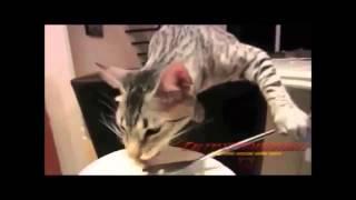 Только самые смешные ролики с кошками!
