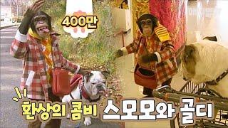 길잃고 자책하는 침팬지와 불독 / 인형뽑기 후 춤추고 / 버스서 졸다 히치하이킹까지!!