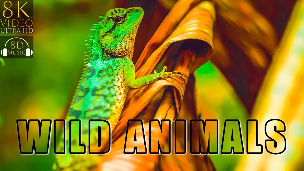 WILD ANIMALS IN 8K VIDEO ULTRA HD HDR with 8D Relaxing Music | 8K Visual 8D Audio