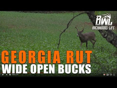 GEORGIA RUT BUCK - BUCK DAZE HUNT