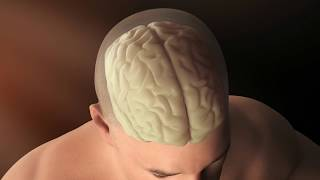 Our brains: the final frontier in scientific discoveries