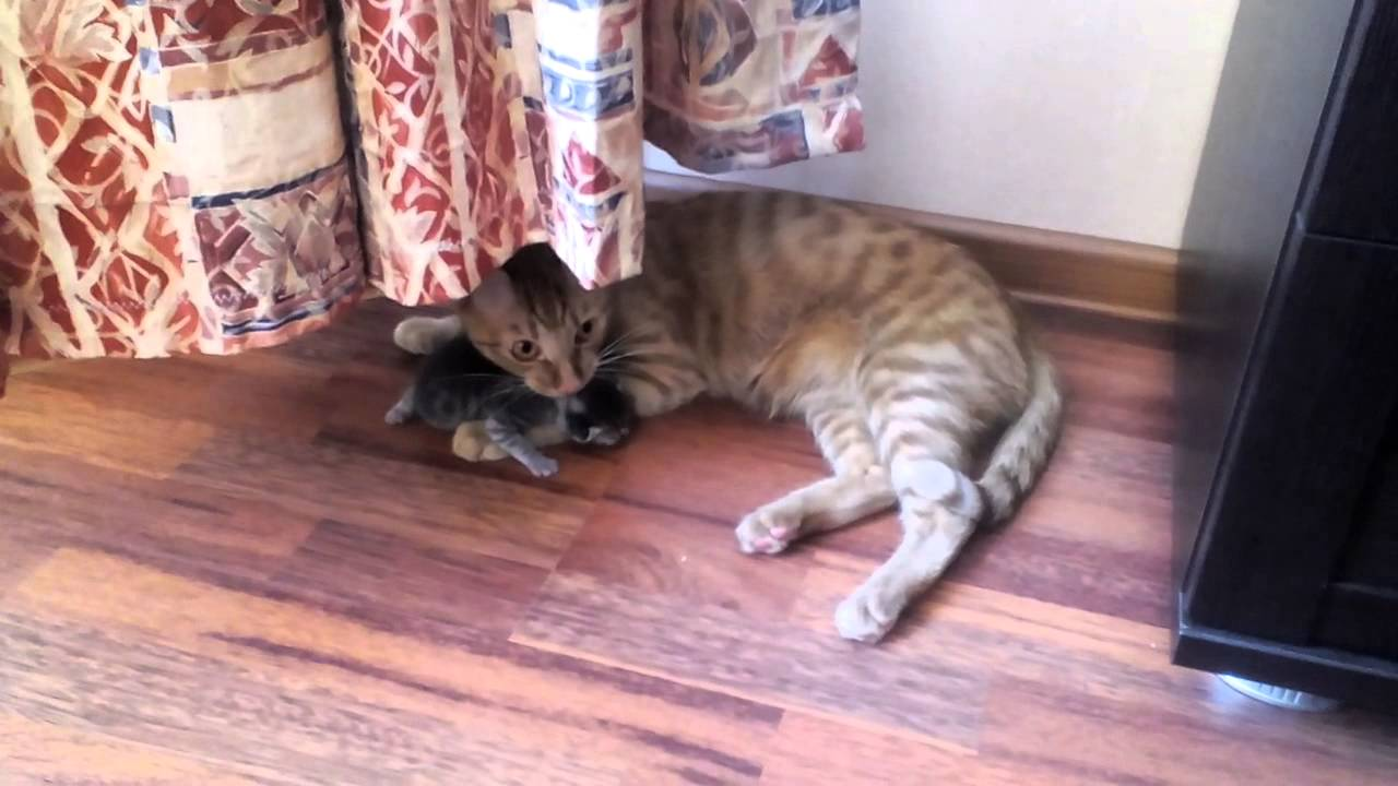 Картинки котят перед нападением