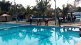 kolam renang tirta mas tg.morawa