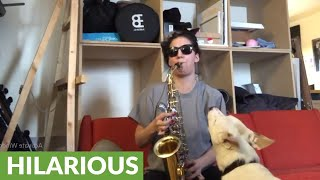 Dog hilariously howls along to owner's band practice thumbnail