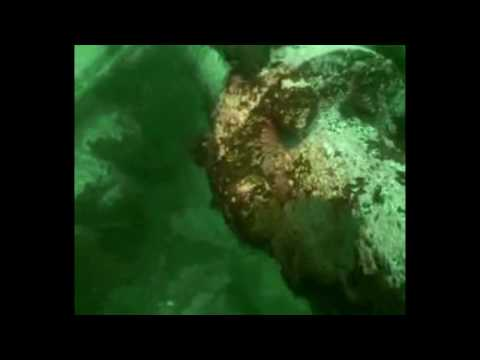 Fan Favorites  | Diving the Ascania Wreck, Newfoundland, Canada