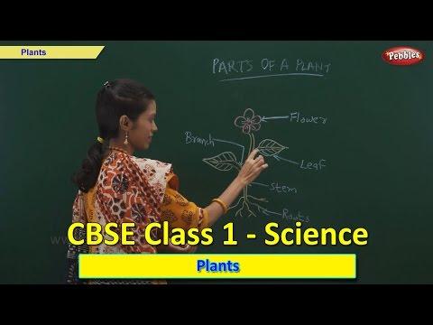 plants-|-class-1-cbse-science-|-science-syllabus-live-videos-|-video-training