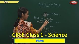 Plants | Class 1 CBSE Science | Science Syllabus Live Videos | Video Training