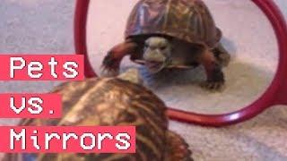 Animals Vs. Mirrors