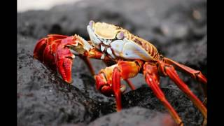 Crab Facts   Interesting Facts about Crab   Facts about Crab
