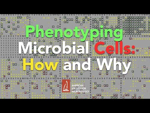 Phenotyping Microbial Cells: How and Why by Barry Bochner, Biolog, Inc.