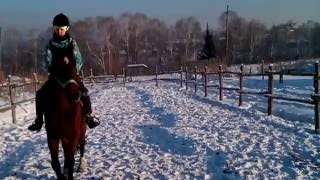 Рысь на лошади Сева.Манеж.собаки.зима.деревья.отряд самоубийц.забор.рысь шаг
