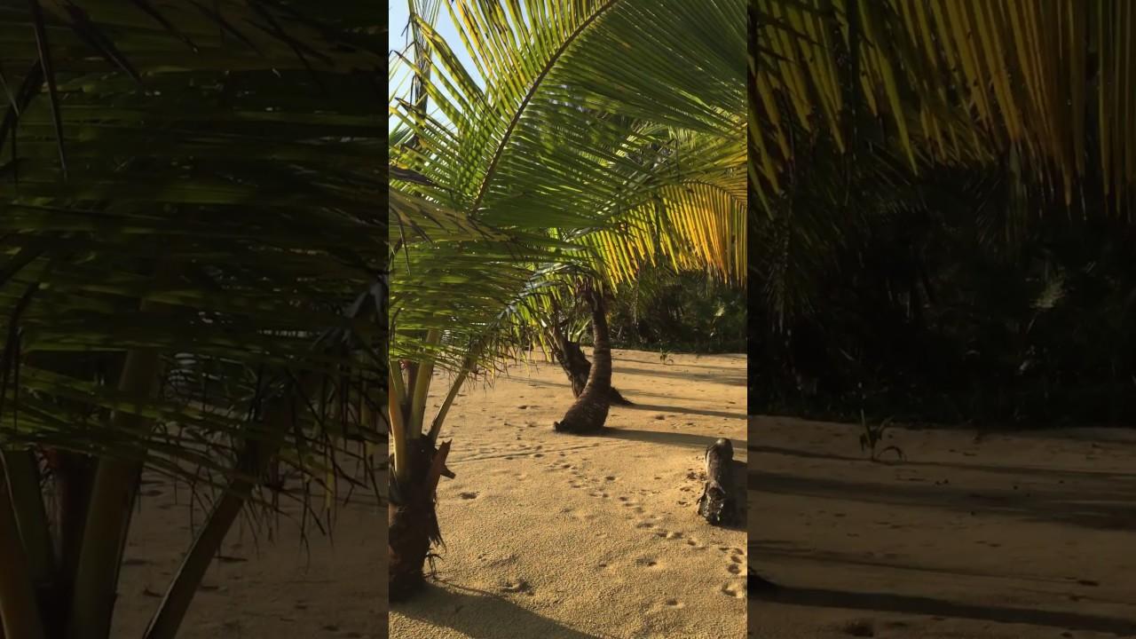 Belize Sabal Beach Travel Off The Beaten Path