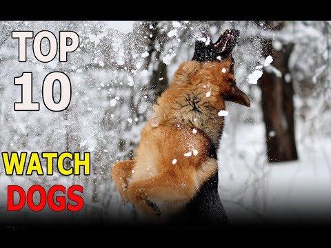 Top 10 WATCH DOG BREEDS | Top 10 animals