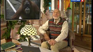 В мире животных  заставка (с 2010 г.) + начало передачи [HQ]