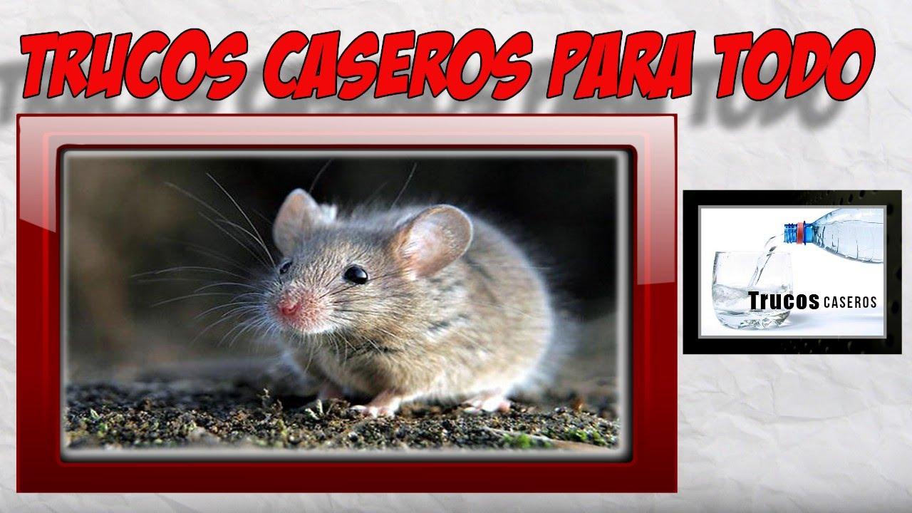 Como deshacerse de los ratones con remedios caseros - Como evitar los ratones ...