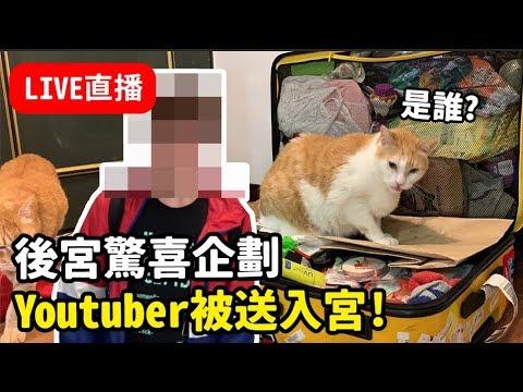 黃阿瑪的直播-看看阿瑪可以躺在狸貓的行李箱多久