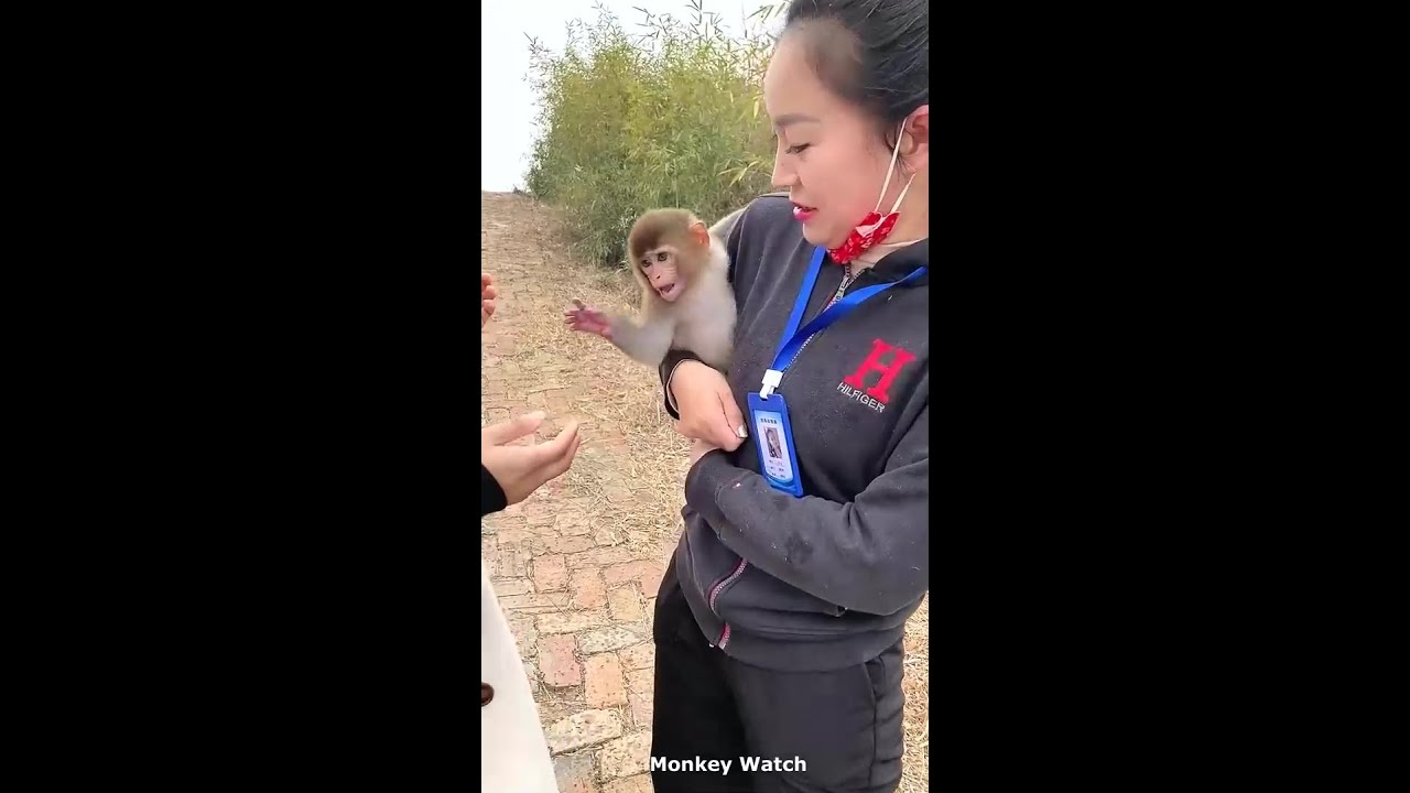 Lovely Baby Monkey And Beautiful Cute girl
