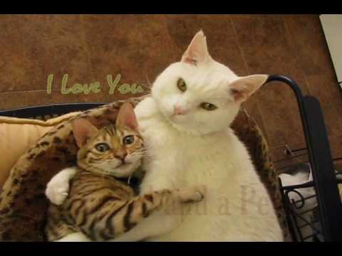 I Love You - A Bushel & a Peck (KiKi & Isabella)