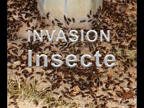 invasion ESSONNE