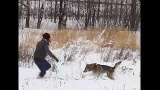 Волчок - чудесный пес в дар