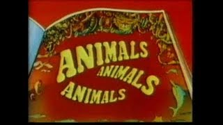 animals, ,animals, animals