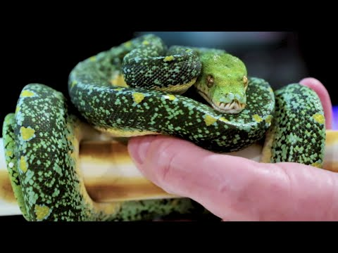 """THIS REPTILE COLLECTION HAS THE """"SICKNESS"""" 