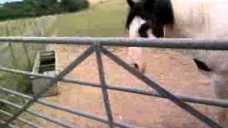 Video me and my horse xxxx download MP3, 3GP, MP4, WEBM, AVI, FLV Oktober 2018