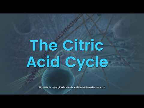 CellX: Overview of The Citric Acid Cycle (HarvardX)