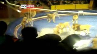 man attacked by circus lion in ukraine 5 october 2010