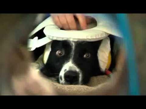 Dogs understand human emotion